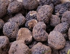 Now for fresh Black Winter Truffles: gourmet delights from Italy's Blue Mountains: 75g