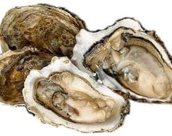 A dozen native Cornish oysters, delivered to your door: £23, saving £19