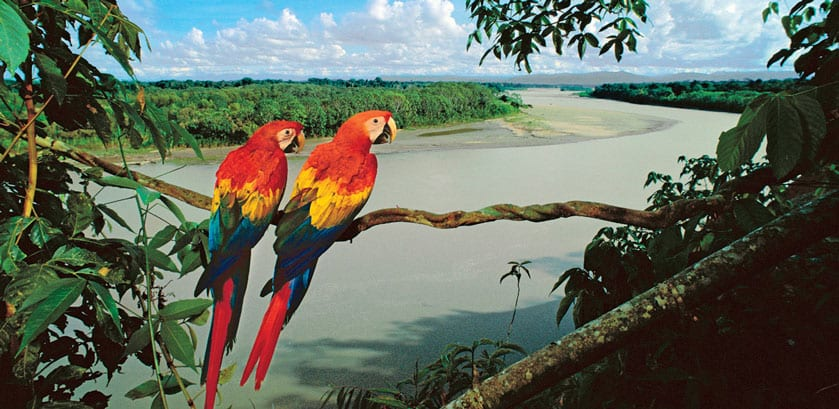 Jungle Experiences, Amazon Cruise, Peru