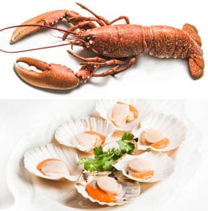 Delicious Cornish lobsters and scallops collection